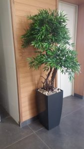 בירוק צמחיה מלאכותית 5