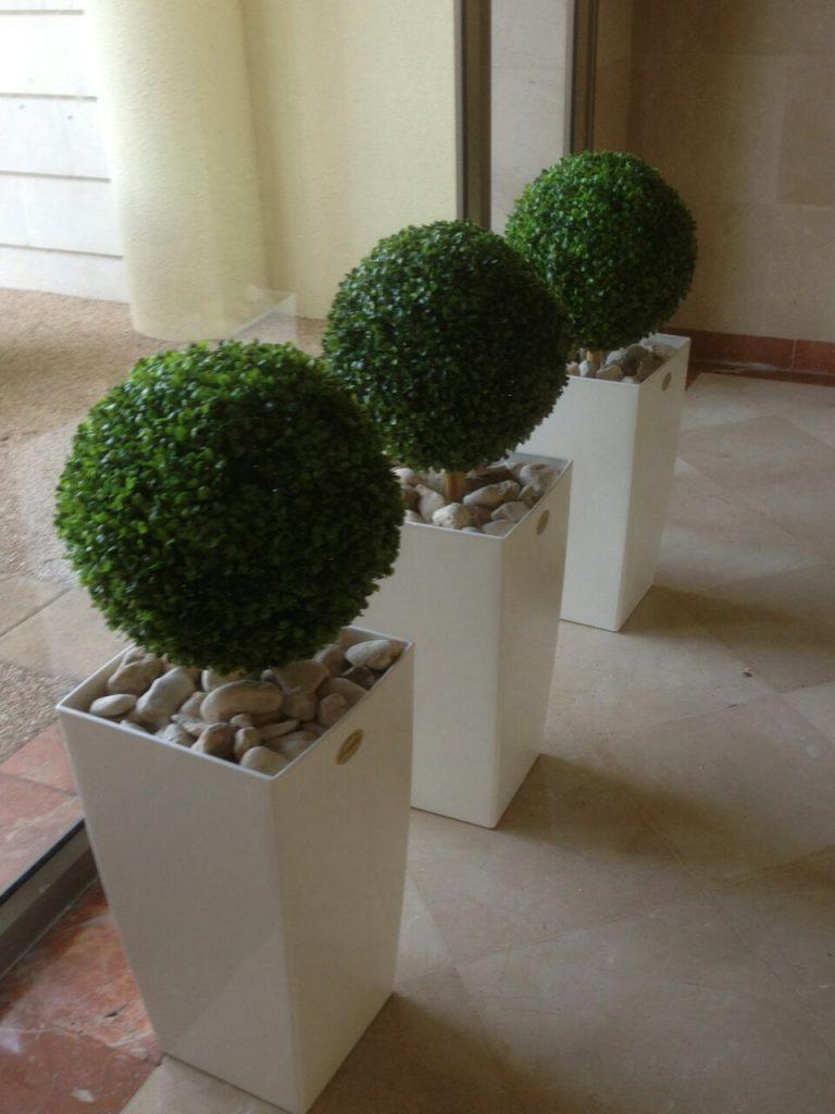 צמח כדורי מרשים